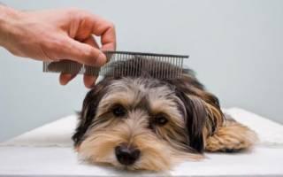 Как расчесать колтуны у собаки?