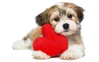 Какая самая милая порода собак?