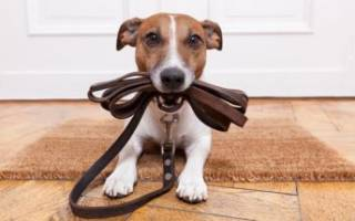 Как сделать поводок для собаки?