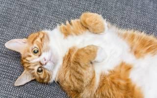 АСД 2 для кошек схемы применения