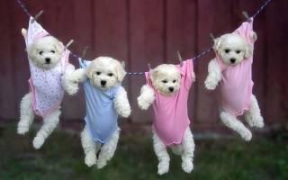 С какого возраста можно обучать щенка командам?