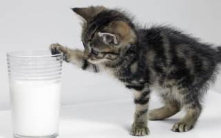 Чем кормить котенка в 1 5 месяца?