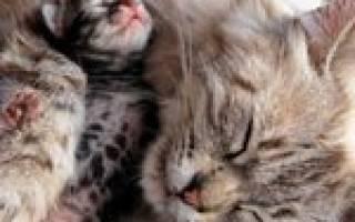 Может ли кошка съесть человека – почему коты убивают котят?