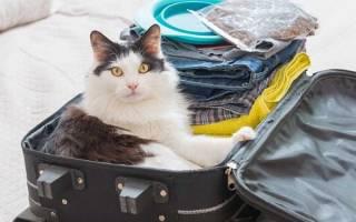 Куда деть кошку на время отпуска – временный приют для кошек
