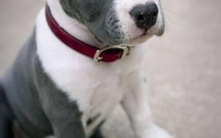 Как подобрать ошейник для собаки?