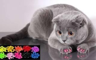 Силиконовые накладки на когти для кошек – сколько стоят антицарапки?