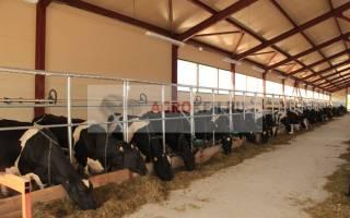 Проект фермы на 50 голов КРС