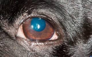 Кератит у собак лечение в домашних условиях