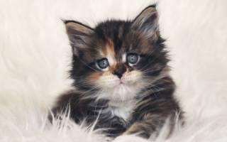 Чем кормить котенка если у него понос: рисовый отвар для кошки