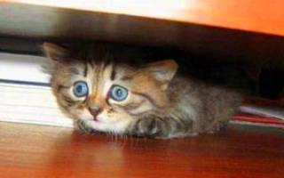 Кот чего то боится и прячется: пугливый котенок что делать