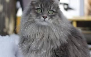 Рибафлокс инструкция по применению для кошек, марфлоксин раствор для инъекций