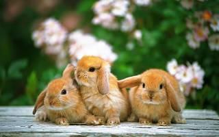 Что не умеет делать кролик, обиженная зайка