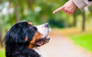 Как стать авторитетом для собаки?