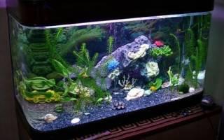 Можно ли класть в аквариум морские ракушки?
