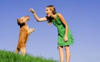 Как отучить щенка кусать кота?