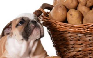 Можно ли кормить собаку картошкой?
