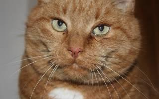 У кота слезятся глаза выделение коричневого цвета