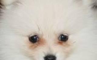 Отбеливающий шампунь для собак