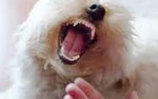Как отучить щенка кусаться во время игры?