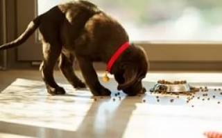 Сколько собака может прожить без воды?