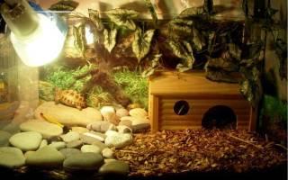 Какая лампа нужна для черепахи красноухой