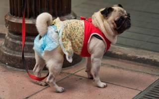 Как сделать памперс для собаки?