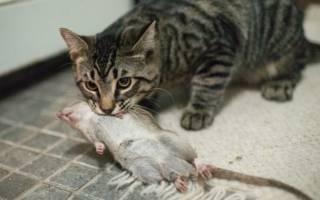 Почему кошки приносят свою добычу хозяевам?