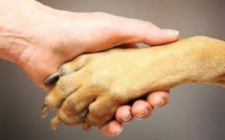 Сколько пальцев у собаки на задних лапах?