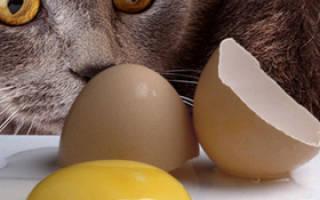 Можно ли котенку давать вареное яйцо?
