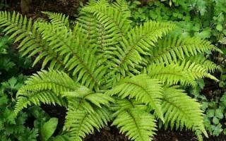 Какие самые древние растения на нашей планете?