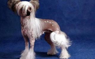 Сколько пород собак официально существует?
