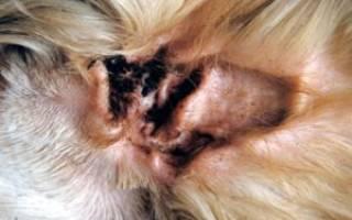 Ушные капли для собак от ушного клеща