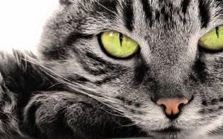 Правда ли что кошки лечат – коты целители