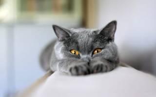 Кот тянет задние лапы что делать – у кошки слабость еле ходит