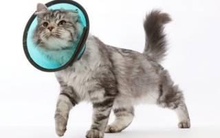 Послеоперационный воротник для кошек