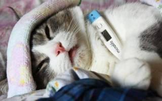 Болезни у кошек симптомы и лечение – больные коты