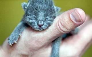 Новорожденный котенок не ест и слабеет
