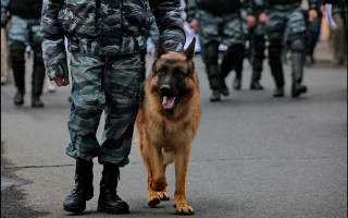 Какие породы собак используют в полиции?