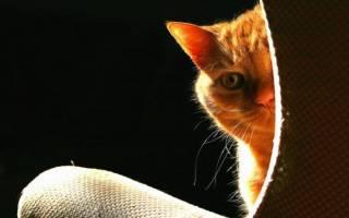 Моча кота пахнет аммиаком