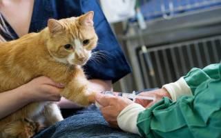 Обезболивающее для кошек в домашних условиях, кетанов кошке дозировка