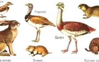 Какие растения и животные обитают в степи – интересные факты о степях России