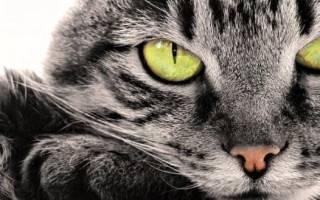 Чем усыпить кота в домашних условиях – как усыпляют кошек в ветклиниках?