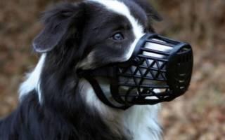 Какой намордник лучше для собаки?