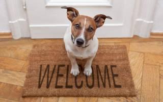 Какая порода маленьких собак самая неприхотливая?