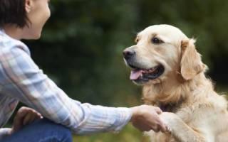 Как собака выбирает хозяина в семье?