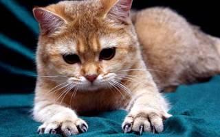 Ножницы для стрижки ногтей у кошек – как подстригать коту когти?