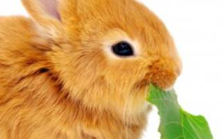Кролики плохо набирают вес