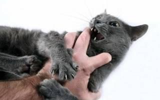 Кот агрессивный царапается и кусается что делать – злые котята