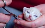 Со скольки месяцев можно стричь когти котенку