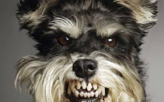 Как выжить при нападении собаки?